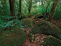 La naturaleza de este país centroamericano atrapa sin pretensiones. Sus bosques milenarios son su mayor orgullo y mejor patrimonio. / GEOFOTOS