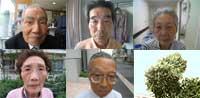 Sunao Tsuboi, Manabu Watanabe, Sayoko Kageyama, Kazuko Tarui, Toyohiko Kuwabara y el árbol superviviente, Ginkgo.