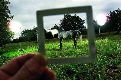 incomodidad del caballo actor Fotografías