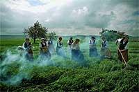 La siega. Varias mujeres pertenecientes a la Asociación Cultural Vivar, Cuna del Cid, escardan el campo vestidas con el tradicional atuendo de labriegas ajenas al momento histórico.