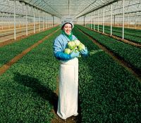Proceden de Milagro, en Navarra. Desde allí surten de los vegetales de cuarta gama ), como la lechuga y la cebolla.