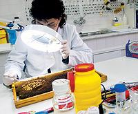 En el Centro Apícola de Guadalajara, en la localidad de Marchamalo, se investiga esta pandemia.