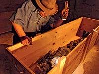 El egiptólogo Zahi Hawass en un almacén del Museo de El Cairo analiza los restos de una momia.