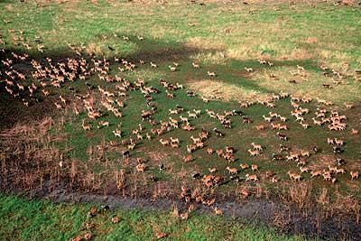 """Es la única consecuencia positiva de los 22 años de conflicto en sudán. la fauna del pantano del sudd se ha multiplicado como en un aislado """"parque jurásico"""" bañado por el nilo. en las primeras incursiones se han contabilizado 24.000 elefantes y un millón de antílopes."""