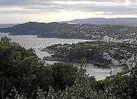 Una típica imagen de la Costa Brava: la de frondosos bosques de pinos que extienden su dominio hasta rozar la orilla del mar./ Foto: M. MONTAÑO