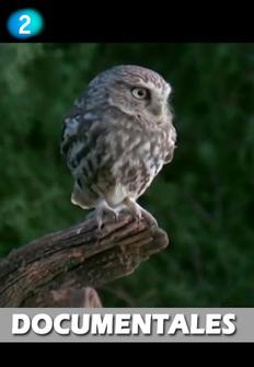 Documental: Los colibríes, preciosos mensajeros