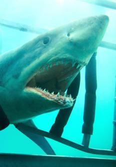 Tiburón 3D: La presa