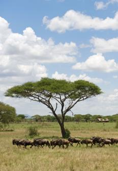 Los Secretos Mejor Guardados De Tanzania