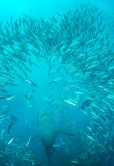 El pasaje de los tiburones