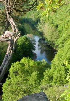 Señores del bosque: vida salvaje a nuestro lado