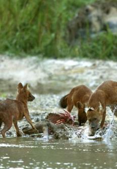 Tailandia salvaje