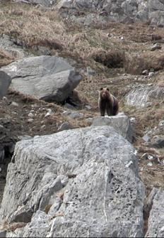 Alma de cazador: Los osos gigantes de Magadan