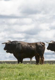 Por las rutas del toro