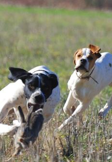 Perros y Caza