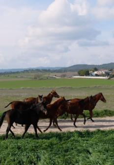Todo caballo