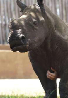 Orfanato de rinocerontes